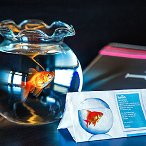 goldfish for single traveller